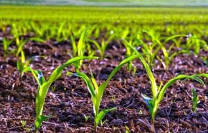 удобрения для комнатных и садовых растений